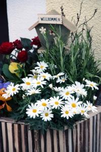 Herzlich willkomen lieber Frühling