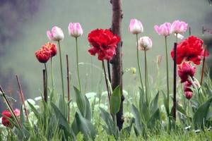 Blumenpracht im Regen