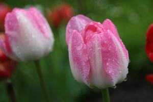 Glitzernde Regentropfen auf den Blumen