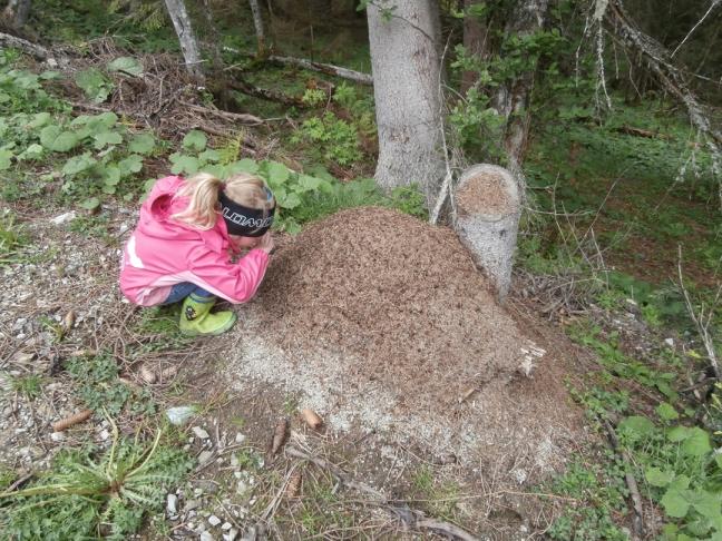 ein Ameisenhaufen ist ein echtes Naturwunder - am Richlegghof ist so mancher davon zu finden