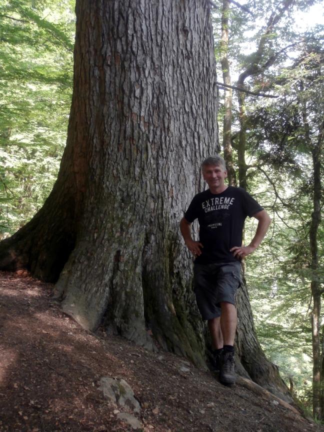 Lammertaler Urwald - hier stehen Österreichs höchste Bäume