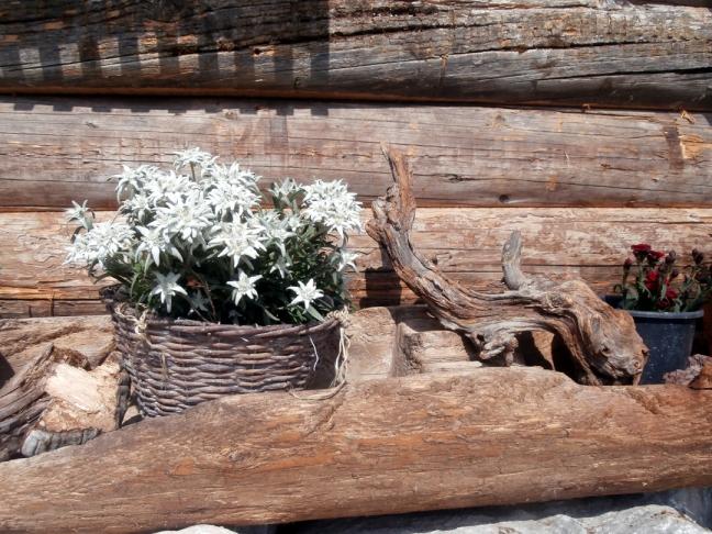 Blumenschmuck auf der Spießalm im Lammertal