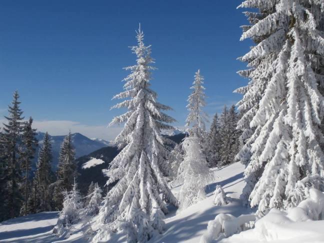 herrliche Winterwelt in Filzmoos