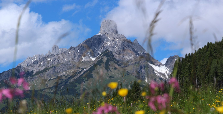 Bergpanorama mit Blumenwiese Richlegghof Filzmoos