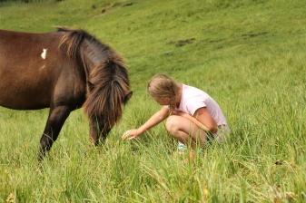 Pferde beim Duisitzkarsee