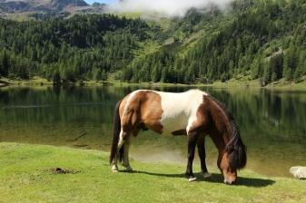 Pferde auf Sommerfrische am Duisitzkarsee