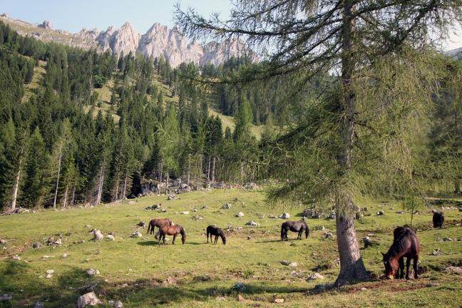 Pferdeherde auf der Hofalm